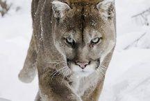 Animals-beautiful