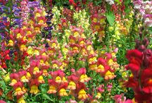Delightfully Colorful Garden