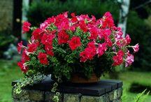 diverse\flori\decoratiuni\idei practice