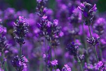 Plantas Medicinales / Uso y propiedades de las plantas medicinales