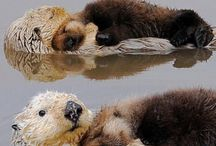 otter cuteness