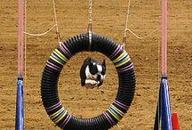Wheels for Gertie & Agility for Izzy and Gil