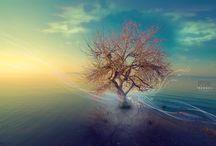 Tree Hugger / by Shawn Slotke Brown
