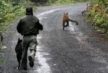 fearless dogs