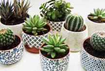 I Love Succulents & Cacti / Labour of love