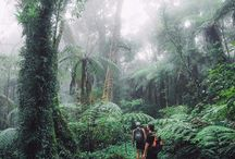 Explore :: QLD