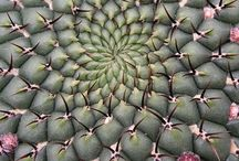 Succulent and Cactus Inspiration