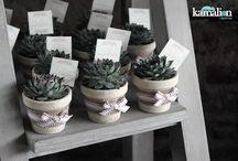 plantita suvenir