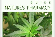 The Medical Marijuana Guide. / Natures Pharmacy. Educate before you medicate.  The Medical Marijuana Guide is an in-depth look on how to make effective natural medications.  Learn how cannabinoids found in marijuana effect the endocannabinoid system to restore physiological balance.  Make extractions and infusions like cannabis oil, tinctures canna oil and canna butter.  Learn about the powerful healing benefits of eating and juicing fresh raw marijuana, the amazing new super food. Also included are many cannabis recipes.