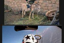 Humor militare
