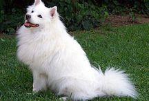 Non-Sporting Group (AKC) / In der Non-Sporting Group werden Hunderassen mit sehr verschiedenen Verwendungen geführt, die weder als Jagdhunde noch als Wach- oder Hütehunde gezüchtet wurden.
