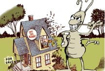Murray Pest Control / all you want to know about pest control