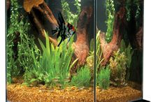Aquariums and Reptile / Cool Critters and Products for the Reptile and Fish Geek! / by Samantha Spidel