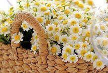 Flowers és alkalmi képek