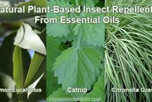 Nautral Insect Repellents / Many plant-based natural insects repellents are just as effective as DEET. Use these essential oils to repel mosquitoes and go chemical-free!