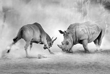 Rhino - Stop Rhino Poaching  / This is our heritage ... rhino poaching is at it's worst in history and the senseless slaughter of these incredible majestic animals makes me feel so helpless in the grand scheme of things.