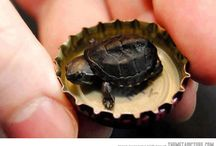 I really love turtles