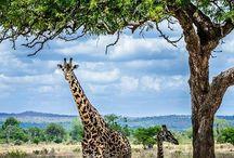 holidays in Tanzania and Zanzibar
