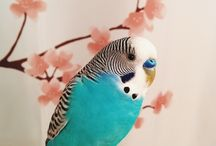 Little Birdie Friend / In the near future I want to get a pet parakeet! Here's my research leading up to it.
