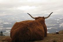 t a u r u s / the energy of the bull.