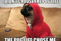 The Pug Life / Yo...
