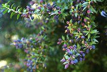 Sardinian Herbarium