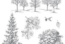 S.U. Lovely as a Tree