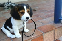 Aww... I wanna get a puppy!! / Cute Little Guys You Can't Help But Love :) / by Erica Mercurio
