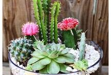 Plantas & hiervas