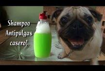 shampoo pra cachorros