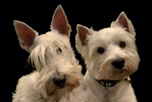 Cute dogs that we like