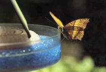 Butterfly gif     Ƹ̴Ӂ̴Ʒ / 8i8 ~ animations ~ ⋈