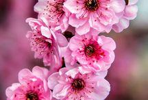 • Spring Vibes