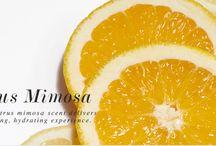 Citrus Mimosa