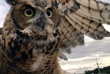 owl / The beautiful bird