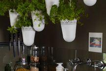 herb tuine