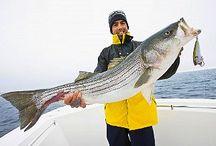 Saltwater Fishing / Saltwater Fishing