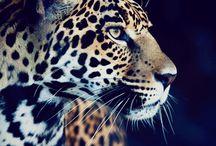 ANIMAL KINGDOM / by Jimmy Billimoria