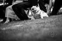 Barrie Wedding