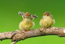 birds birds birds*´´*•.¸¸. *´´*•.¸¸. ..♥ / by Ebru NAMLI ( aynikki ヅ )