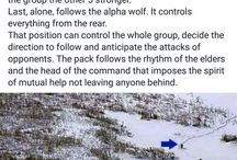 The Howl of the Wolf