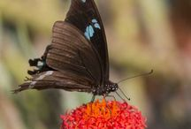 Butterfly pics by Steve Woodhall