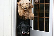 Dogs / Fun, cute, adorable dogs!