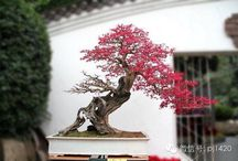 Bonsai / Bonsai trees, tips, and inspiration