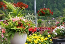 container gardening / Pick a pot. Pick a plant. Put them together and you have a go-anywhere garden!