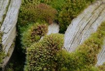 Creative Moss / Creative and beautiful uses of moss in the garden. Moss, one of the most underrated of all garden plants retains water, protects soil and give gardens a gloss of graceful age.