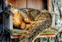Wiewiórki