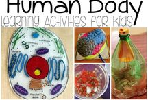 Human body / Human Body Unit Study for Homeschoolers
