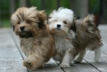 Animals / Cute animals