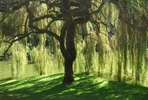 Under the Willow Tree / by Rebecca Guyton